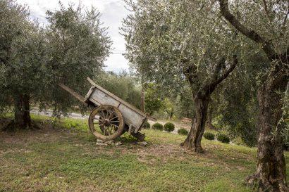 Agriturismo La Romagnana - carro antico