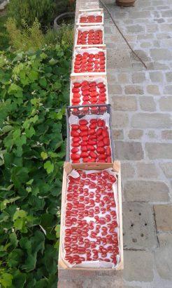 Agriturismo La Romagnana - pomodori