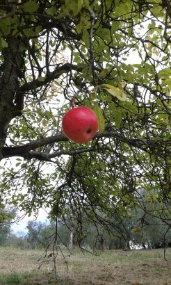 Agriturismo La Romagnana - nostri frutti