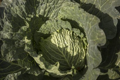 Agriturismo La Romagnana - orto