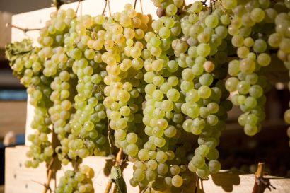 Agriturismo La Romagnana - vinsanto
