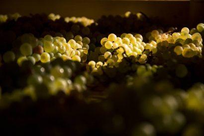 Agriturismo La Romagnana - uva